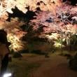 松島 円通院の紅葉