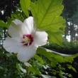 7月の日記20・21 巣立ち、岩戸別神社例祭