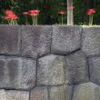 彼岸花、石垣に彩る。