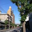 今日の京都。晴天から曇天!