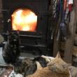 我が家の猫食事の話と、ルリカさんにガイドとのアレについて
