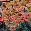 燃える秋、深まる秋!