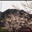 三江線沿線に春の花が咲く