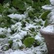 春分の日なのに積雪 1~2センチ