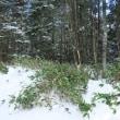八ヶ岳森林調査