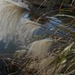 初冬の多摩川散策
