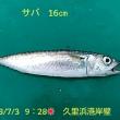 笑転爺の釣行記 7月3日☀ 久里浜港岸壁