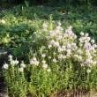 ジョグコースの花