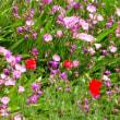 菅生沼のタチスミレの花が咲きました 沼の浚渫作業も開始されています 絶滅危惧種 天然記念物