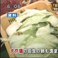 ◆◆◆ 危険!韓国産キムチは絶対に食べてはいけない!
