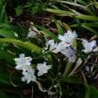 僅かの期間に開花し散った花、そして咲いている花、咲きだした花たち