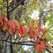 深まる秋、虫の声がやかましいくらい。