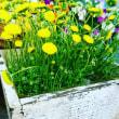 コデマリにモッコウバラ(*^_^*)と庭の花