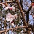4月2日の東京薬用植物園の花