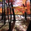 新座市の平林寺に行ってきました。
