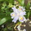 実家の花たち