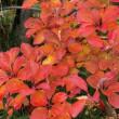 西野緑道の秋色