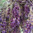 高知県立牧野植物園へタンデムツーリング