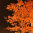 オレンジの夜の紅葉です