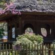 今昔奈良名所「梅もそろそろ咲き始めるかなっ」