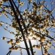 花色写真:黄金色、薫る