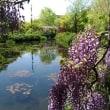 たおやかに咲く ~ モネの庭から(その320)