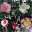ロックスターと意外な3月の花