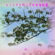 『 レミングと化したか日本桜蘂 』平和の砦575交心zrw1001