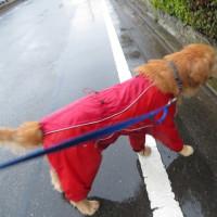 春雨の散歩 !