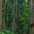 五月は木々も水も、そして風も緑色 埼玉県毛呂山町