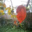 おセンチの秋・・・「最後の一葉」みたいなほんとうの話・・・