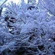雪景色の京都は思った以上にきれい。