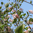 春の日~~♪