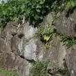 城址の石垣