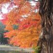 東北も紅葉が始まっていました