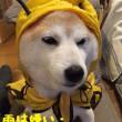 秋の北海道うまいもの会