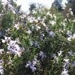 ハーブのお花畑