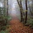 皿ヶ嶺の秋