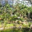 観葉植物・熱帯・温帯植物ファン必見!とちぎ花センターの大温室が凄い!(前編)カカオの実、見たことありますか?