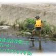 🐠川のガサガサ2018年7月(ガサガサの達人)今年は魚多いかも約20分で約50匹