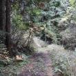 第146回いずみの国の自然館クラブ観察会~大谷林道周辺~ 2