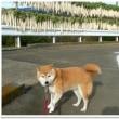 番犬ハナ14歳のお誕生日♪