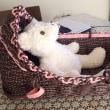 エコクラフトで人形のベッドを作ってみました。