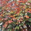 「冬空の下の紅葉の写真を撮りに行きました」