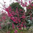 2018-03-14 今日の記録 NTT東日本