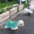 ウサギも亀も仲良く