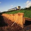 はざかけ収穫の秋 久留里線 馬来田ー下郡 1996-09-15