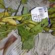 枝豆&玉蜀黍