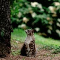 普賢象の木の下で