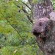 万博公園に熊出没する